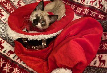 Glen Coco in Christmas hat